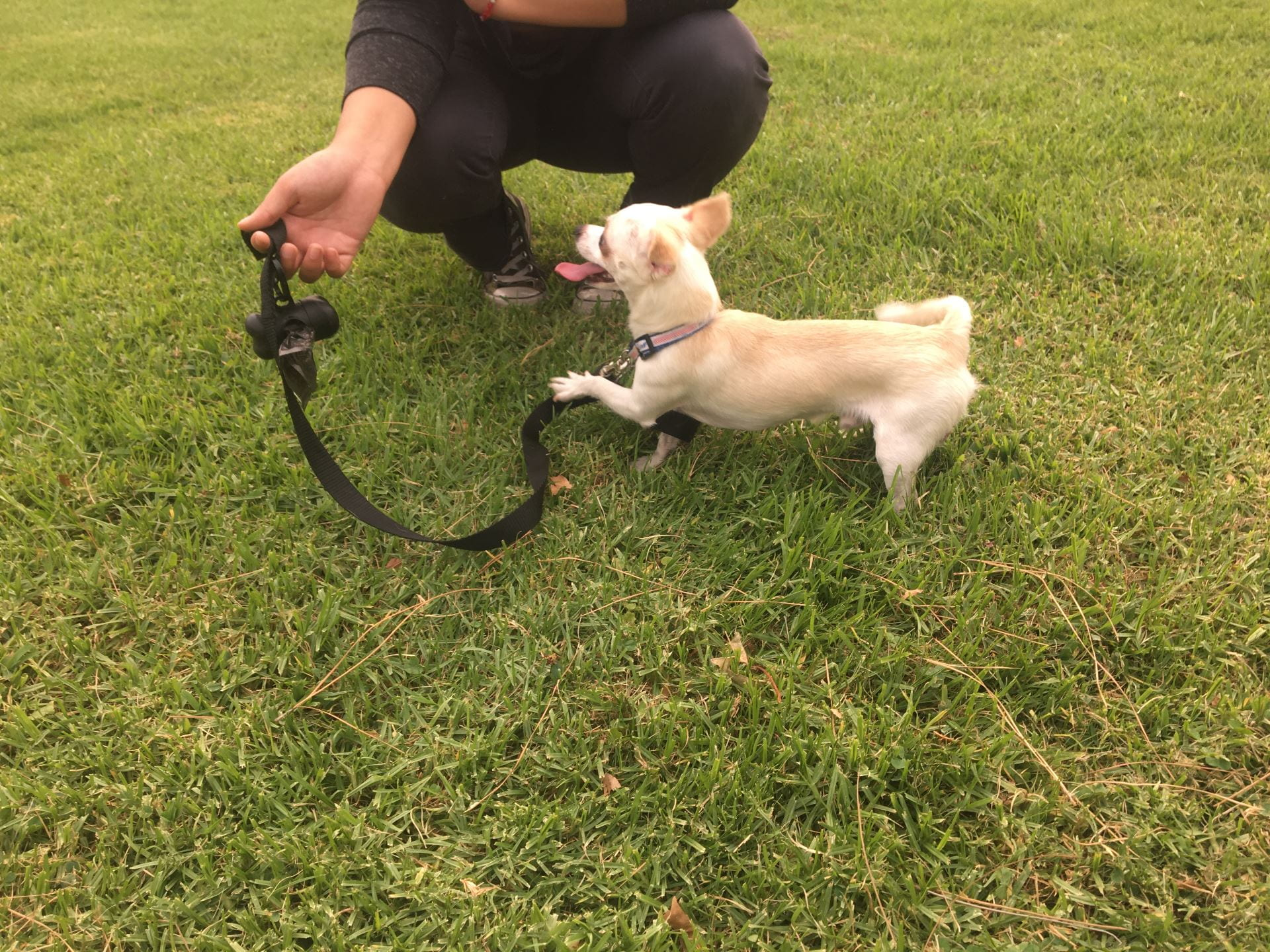 He loves to play with his leash
